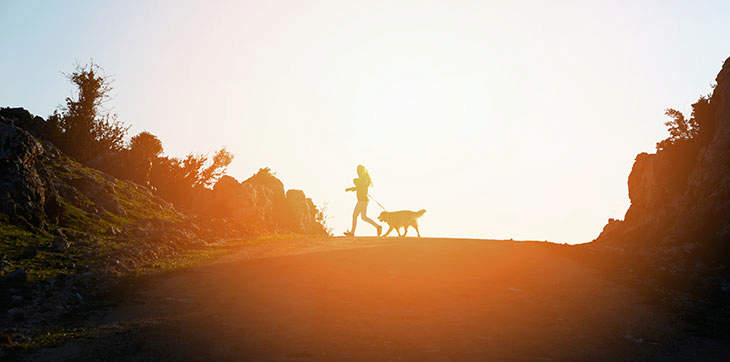 dog walking, dog exercise, dog obesity, dog run, sunset dog walk, dusk dog walk, golden retriever exercise