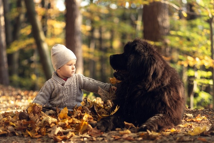 baby and newfoundland