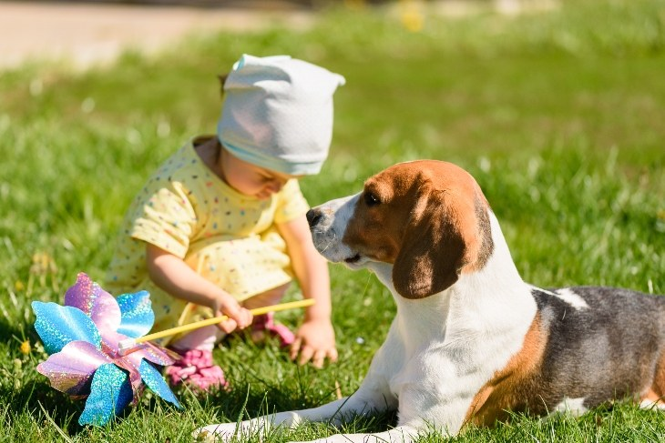 toddler and beagle